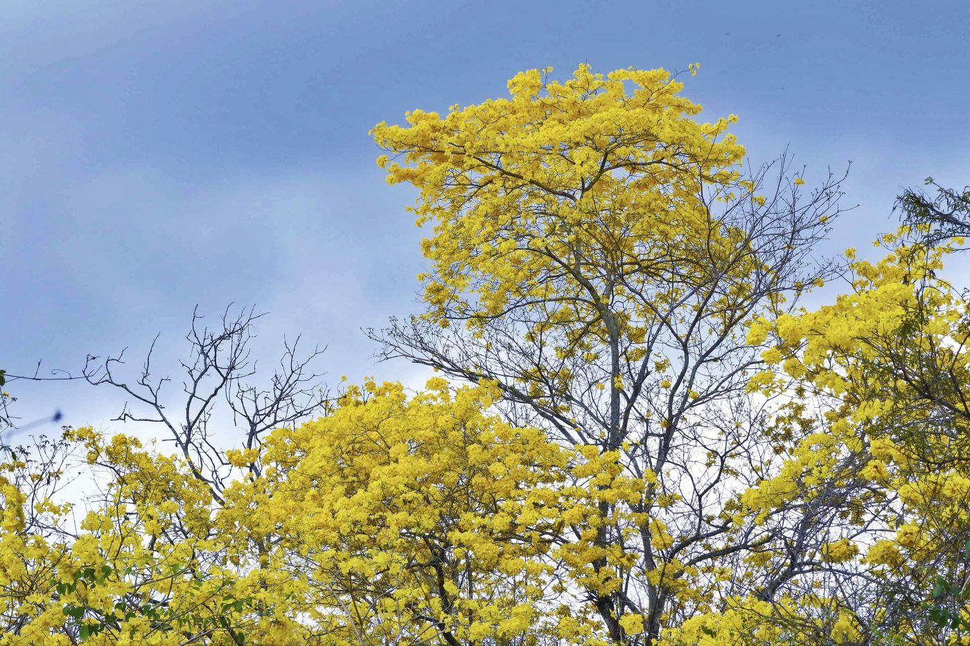 Amarillo natural que seduce a visitantes